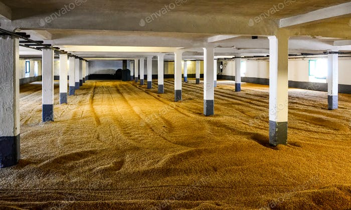Barley malt on malting floor in distillery, Scotland
