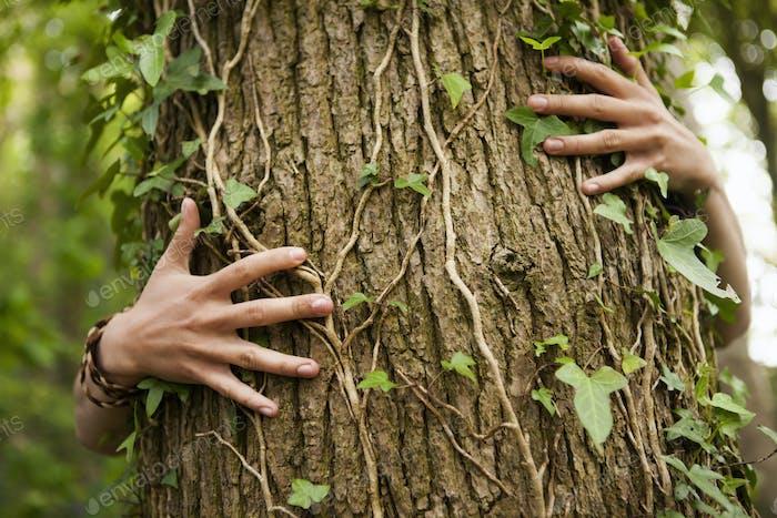 A person hugging an oak tree. Hands spread across the bark.