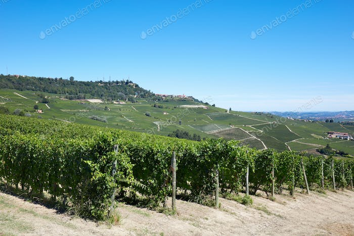 Green vineyards and Langhe hills in Italy, blue sky
