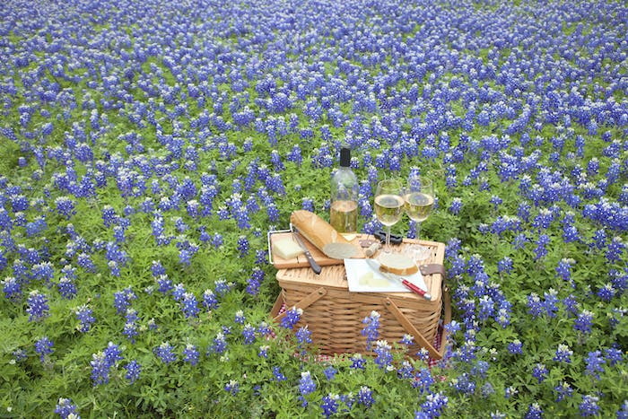 Picnic Basket with Wine Cheese and Bread in a Field of Texas Bluebonnets