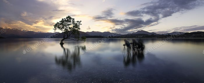 Wanaka tree sunset lake south island of new zealand.