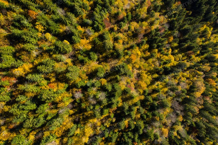Aerial full frame background of colorful autumn forest canopy by drone