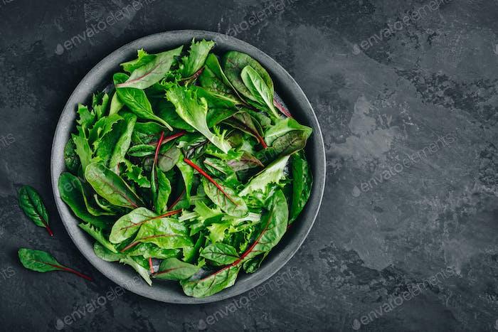 Frischer grüner Bio-gemischter Salat in der Schüssel.