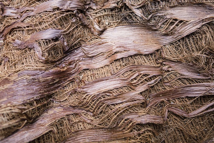Tree trunk bark detail