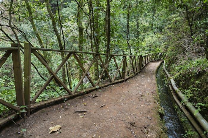 Los Tilos Rain Forest Water Canal, La Palma