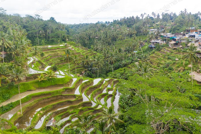 Aerial view of terraced rice fields near a village in rainforest in Bali