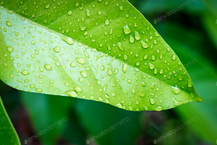 Green leaf with water drop-2