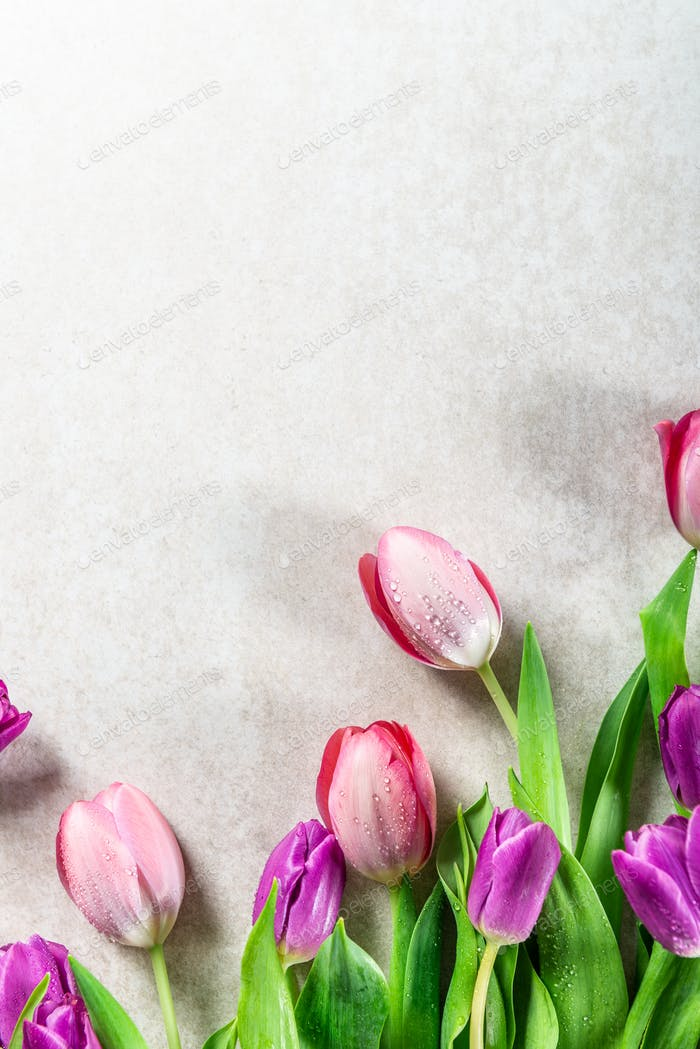 Beautiful purple tulips on grey background