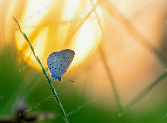 Butterfly on green leaf of grass