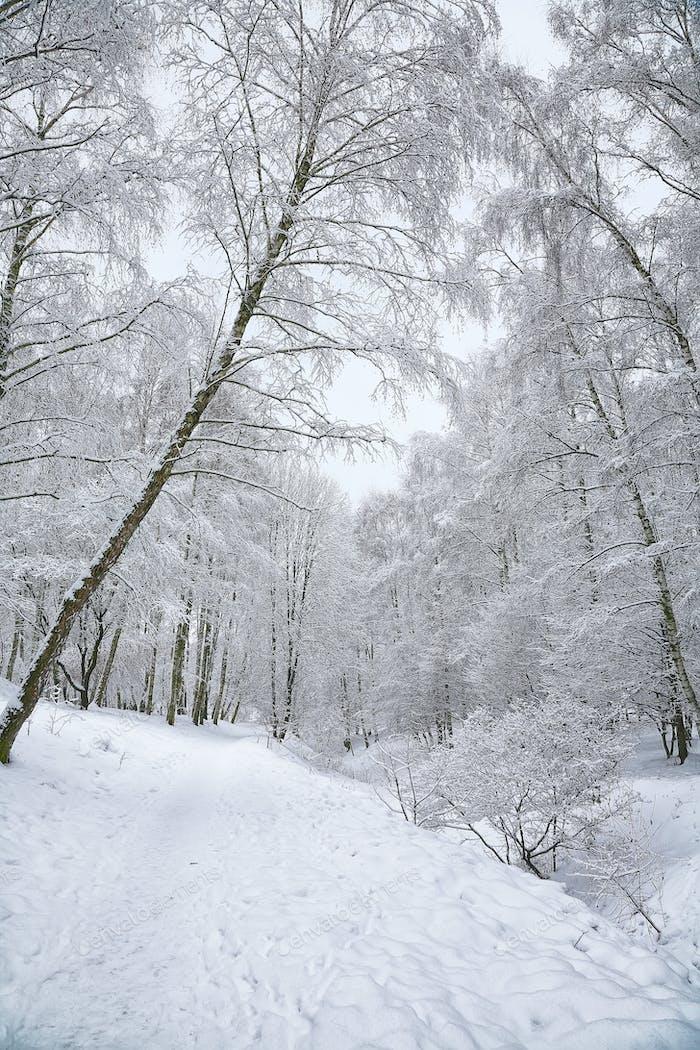 Árboles cubiertos de nieve en el Parque de la Ciudad