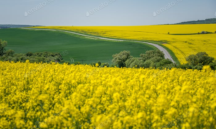 South Moravia landscape and farmland