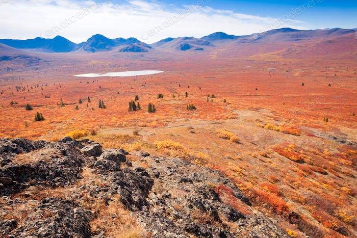 Golden fall alpine tundra Yukon Territory Canada