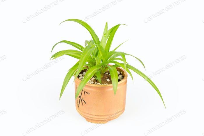 green plant bracketplant
