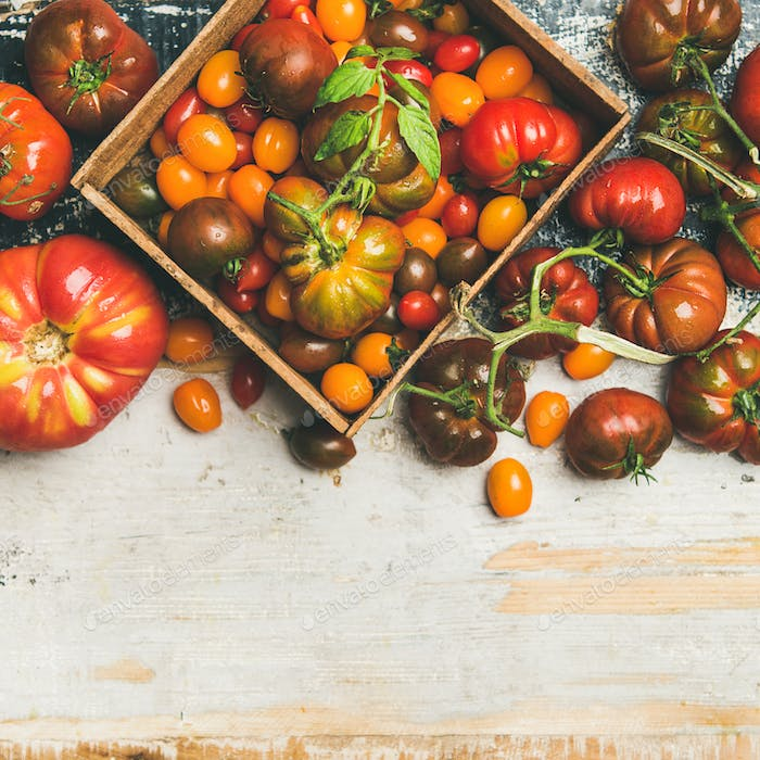 Flat -lay of fresh colorful ripe tomatoes, square crop