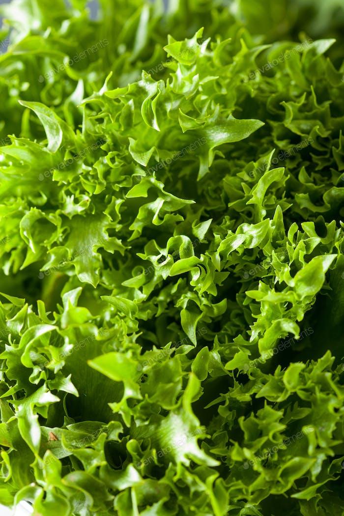 frischer grüner Salat Blatt Hintergrund