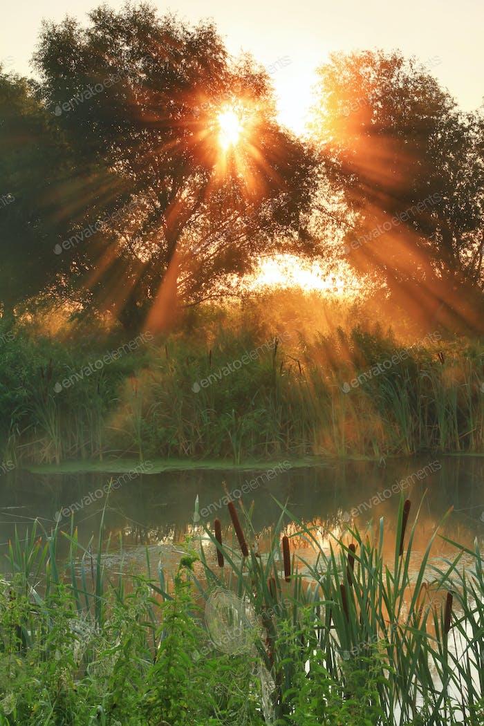 Sun rays on sunrise on the river