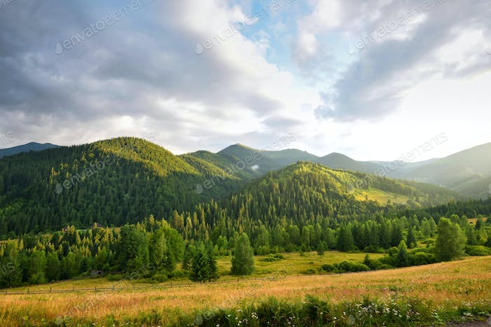 Beautiful mountain landscape with wooded slopes. Summer evening in the Carpathians