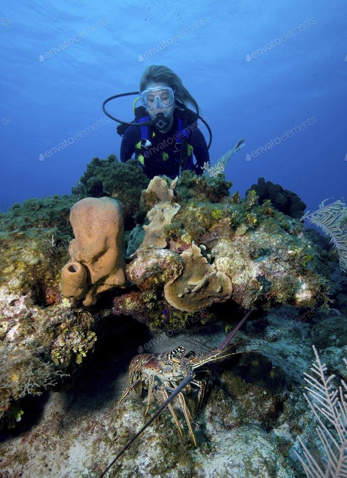 Scuba diving on the south side of Little Cayman, typically dived when strong winds keep recreational