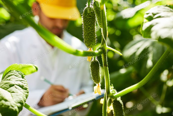 Analyzing growing cucumbers in hothouse