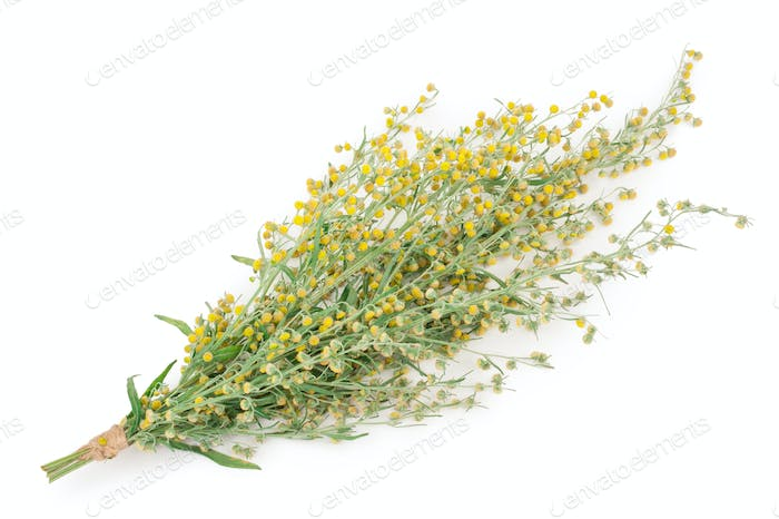 Sagebrush on white background