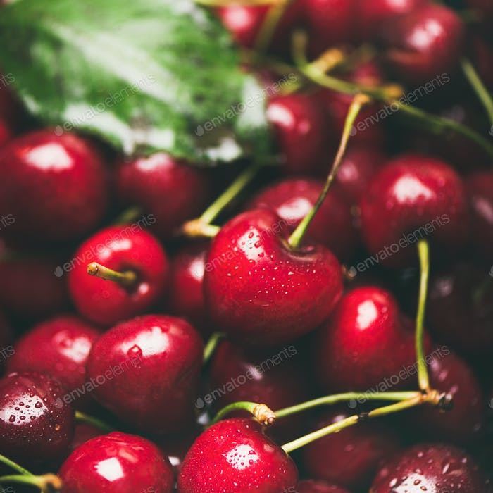 Fresh sweet cherry texture, wallpaper and background, square crop