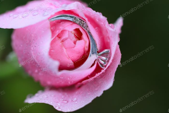 Engagement ring in the rose with raindrops