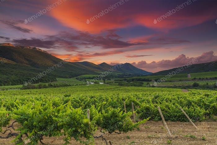Vista panorámica de un viñedo en la campiña toscana