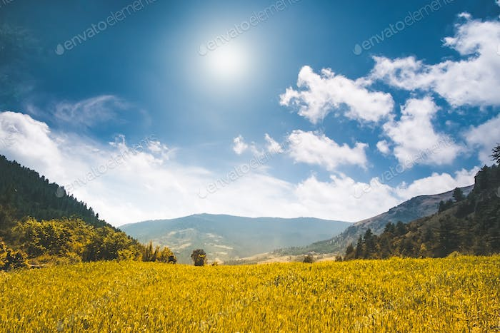Beautiful nature landscape in the summer day
