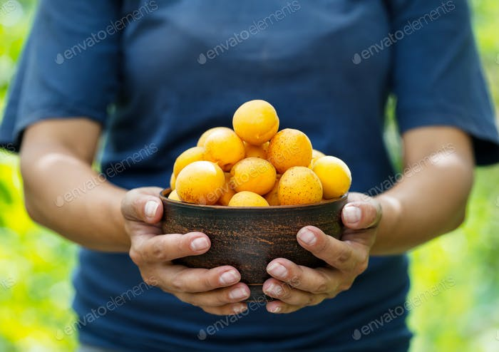 Clay plate filled with apricots in hands of woman farmer