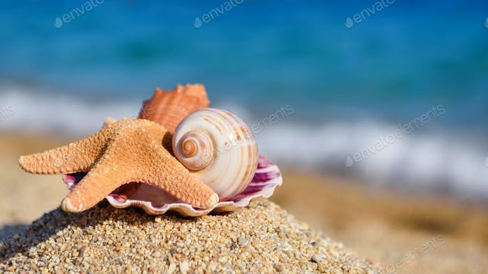 Shells and starfish on the beach against the background of the s