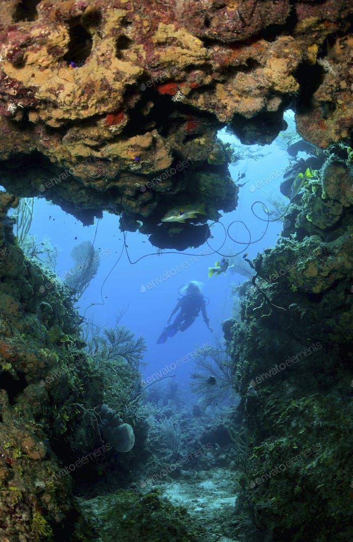 Taucher erforscht Korallenriff