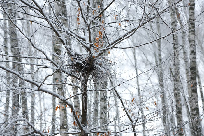 abandoned empty bird nest on branch in the winter with snow
