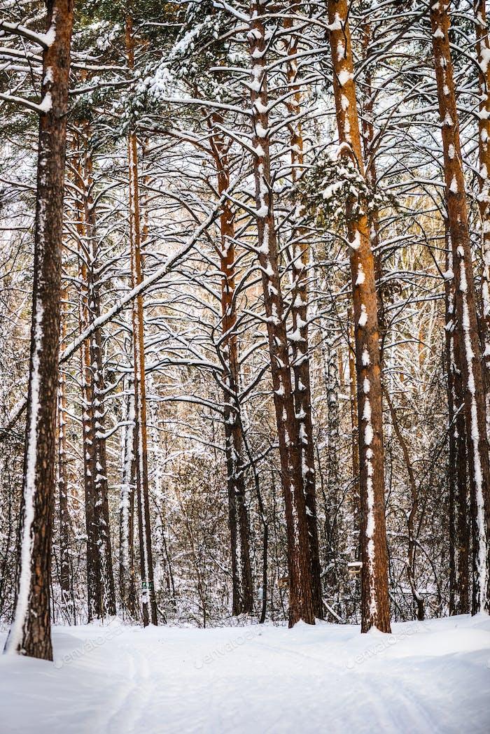 Пейзаж снежного леса