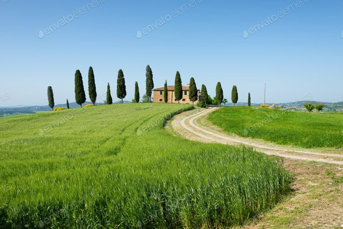 Farm villa with cypresses and crops in Tuscany