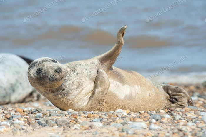 joyful seal on a beach
