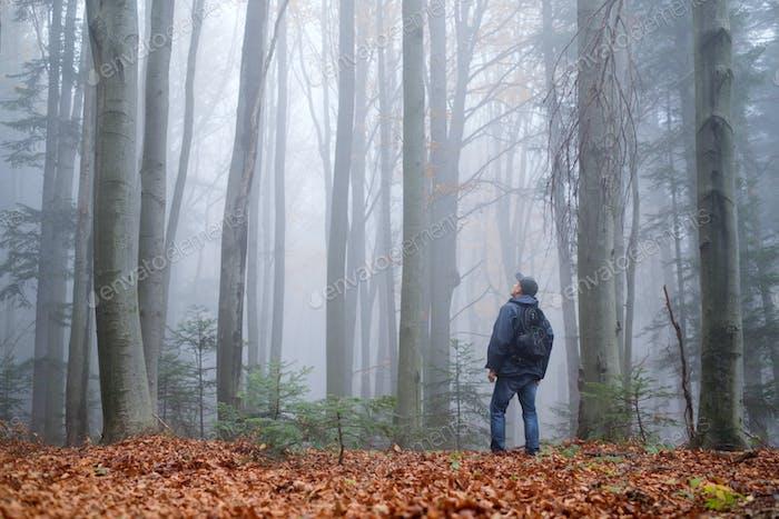 Mann im geheimnisvollen dunklen Buchenwald im Nebel