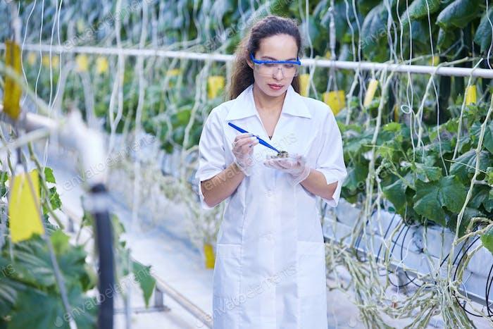 Female Scientist Taking Probes in Plantation