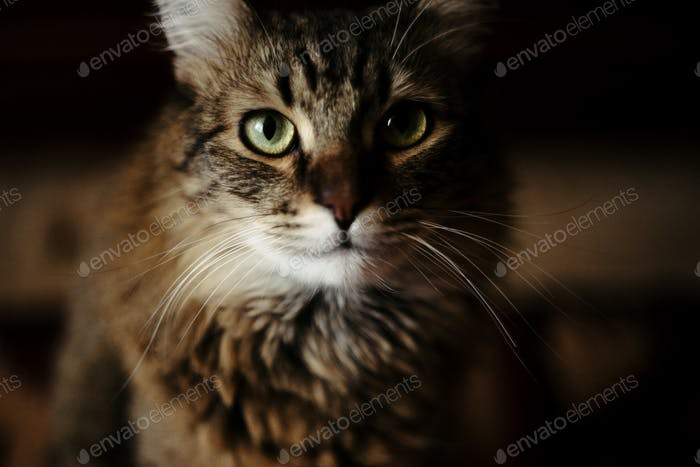 cute sweet cat sitting with amazing wise look, domestic pet