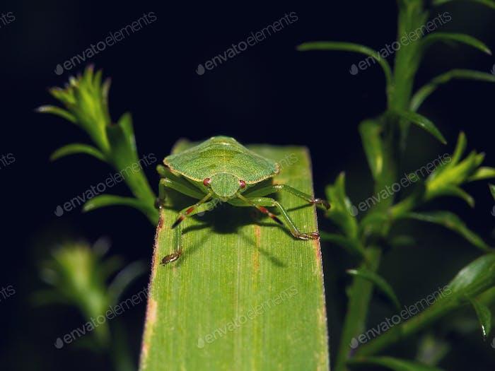 Escudo Bug En Una hoja