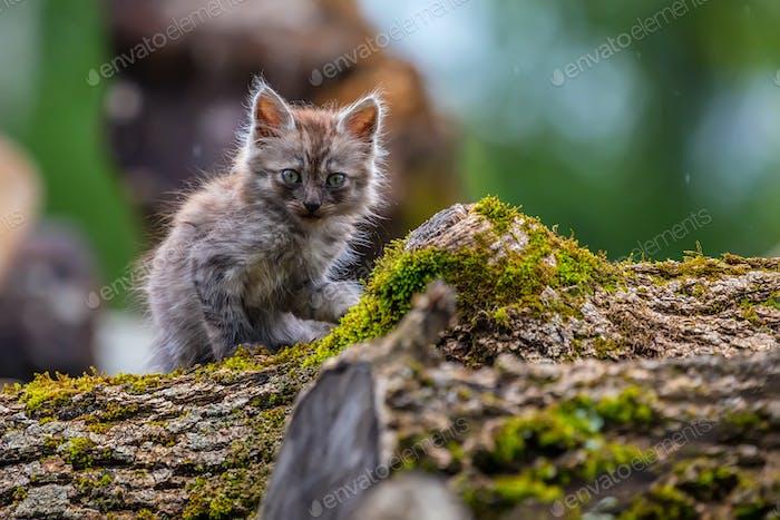 Miserable stray kitten