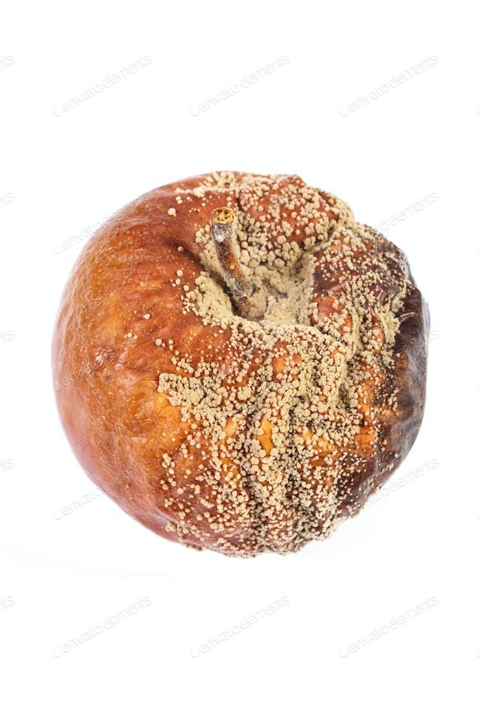 Old wrinkled moldy apple on white background