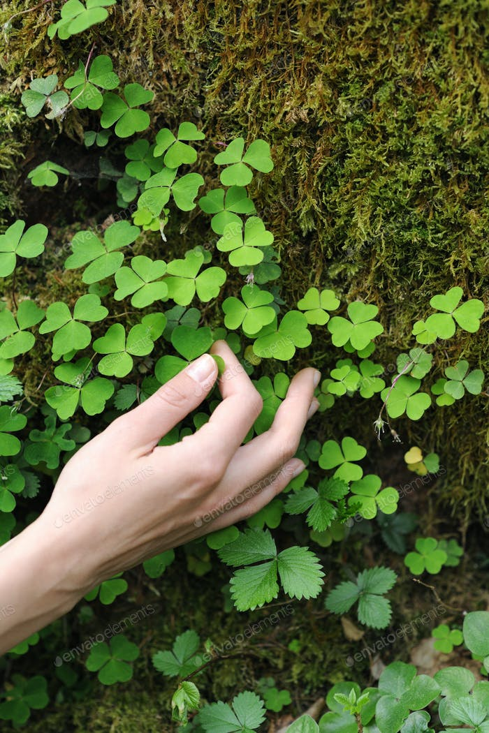 hand with small leaves