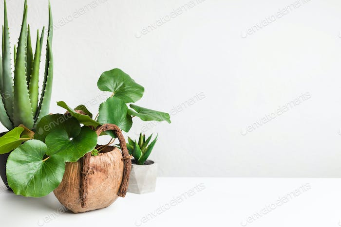 Various evergreen plants in different pots, copy space