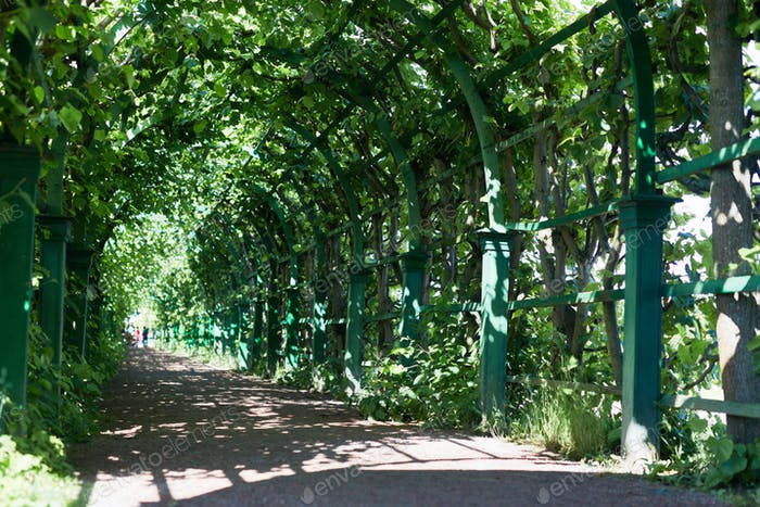 Alley in park