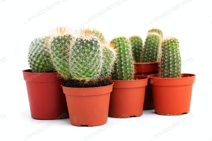 Collection of cactuses in a pot