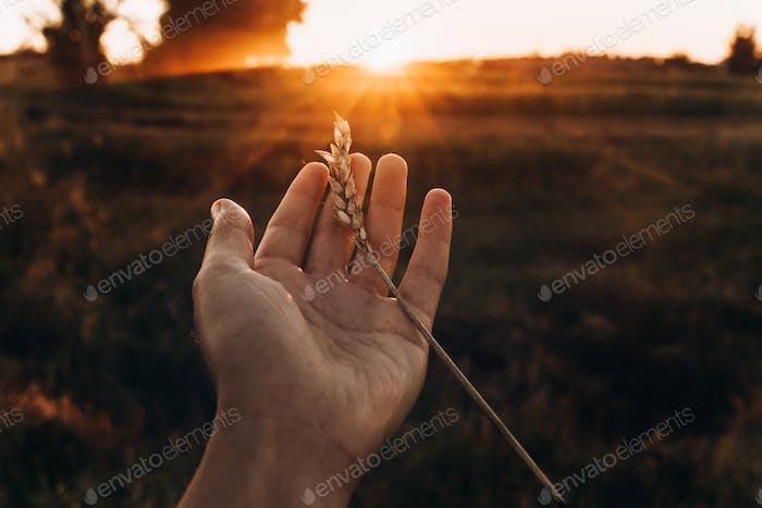 Erde Tag Konzept. Ohr in Hand in Sonnenuntergang Strahlen im Sommer Abend Feld