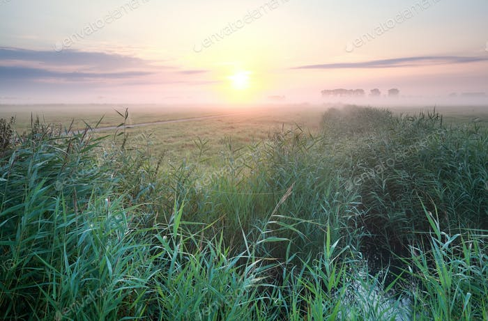 misty summer sunrise over meadow