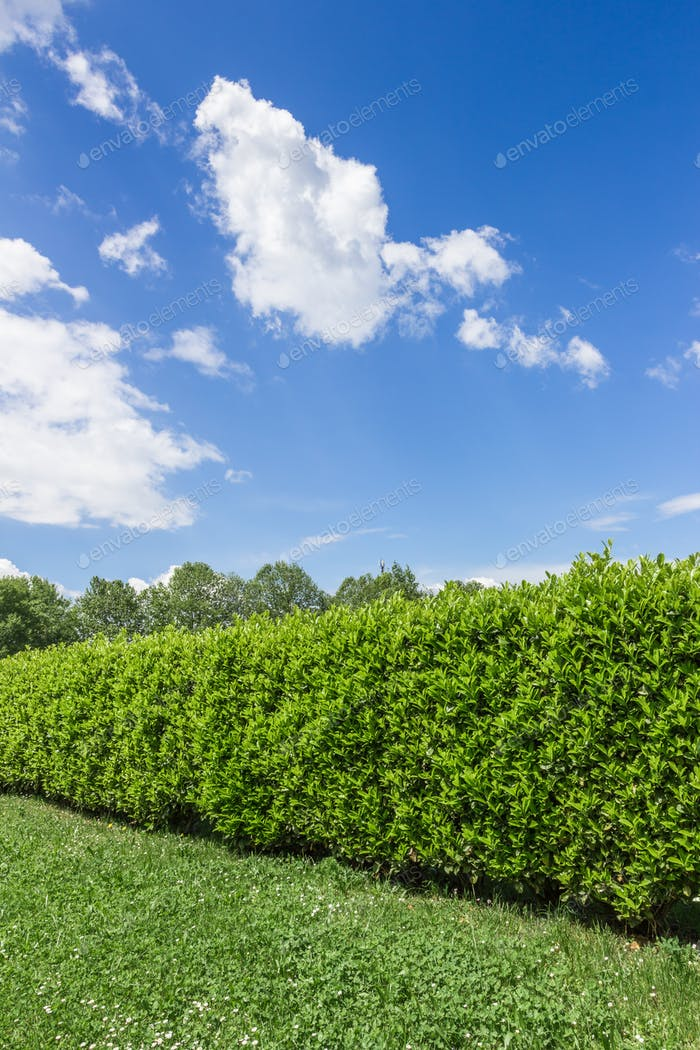 Hedge against the sky