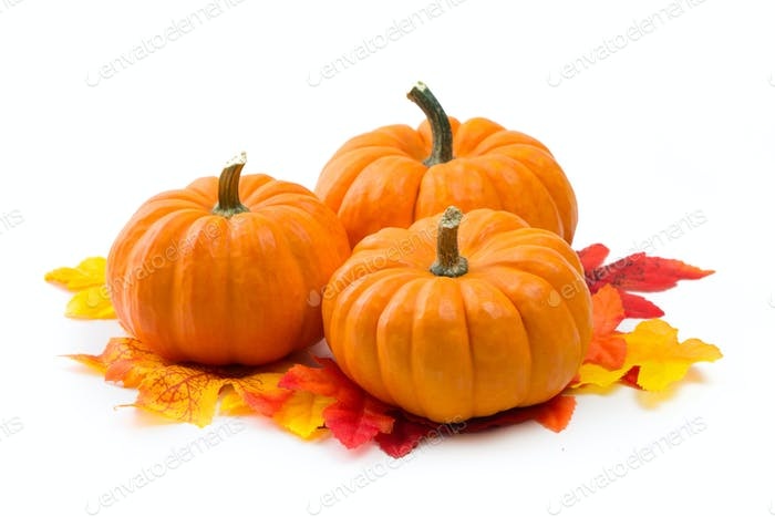 Fresh orange miniature pumpkins isolated