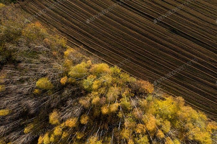 Luftaufnahme des Abholzgebiets für landwirtschaftliche Flächen
